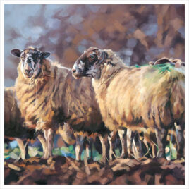 Wool-and-Straw by Debbie Boon