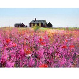 Paul Evans Summers Colours